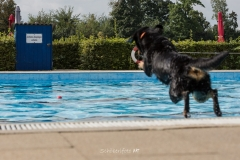 20170917_2Hundeschwimmtag_ObSb-0275