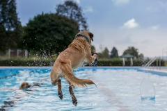 20170917_2Hundeschwimmtag_ObSb-0349