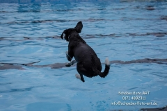 20170917_2Hundeschwimmtag_ObSb-0491