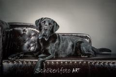 Schoeberlfoto_art_Tierfoto_Bobby (3 von 5)