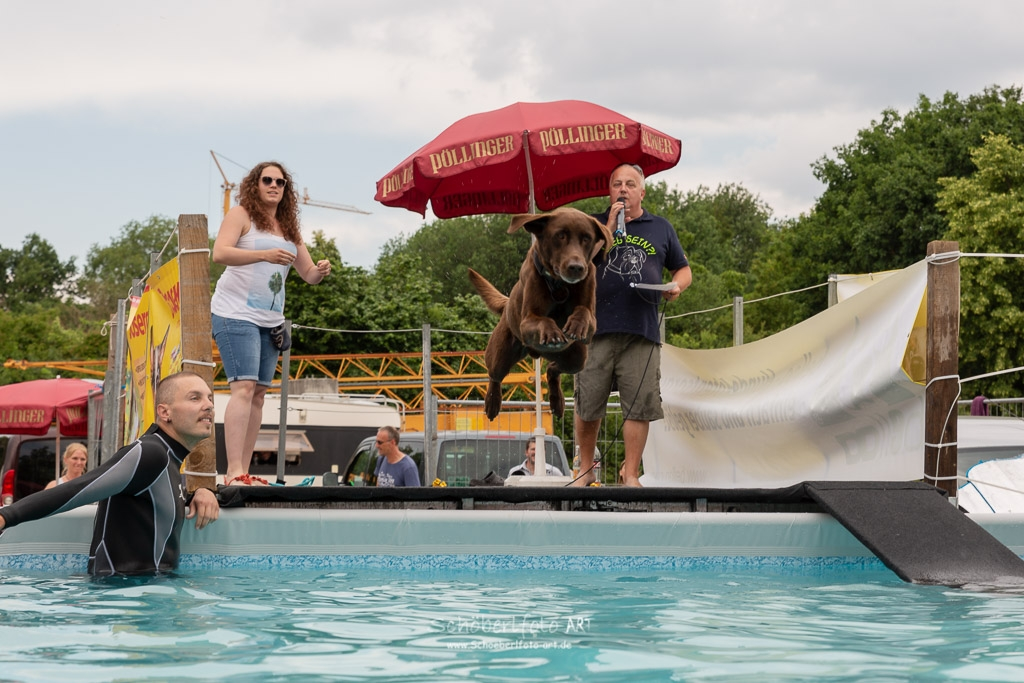 Tag des Hundes in Pfeffenhausen Dog Diving